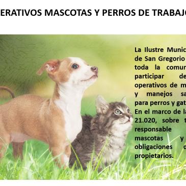 Operativos de microchip y manejos sanitarios para perros y gatos