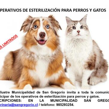 Operativos de esterilización de perros y gatos